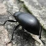 scarafaggetto